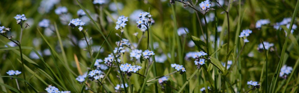 Sommerblumen2