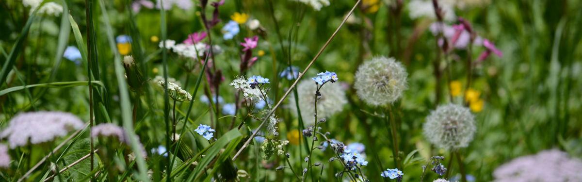 Sommerblumen3